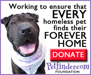 Donate to the Petfinder.com Foundation