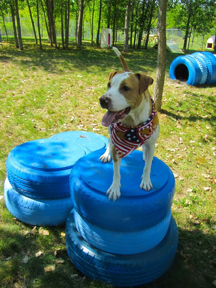 Agility Course For Dogs Agility Course