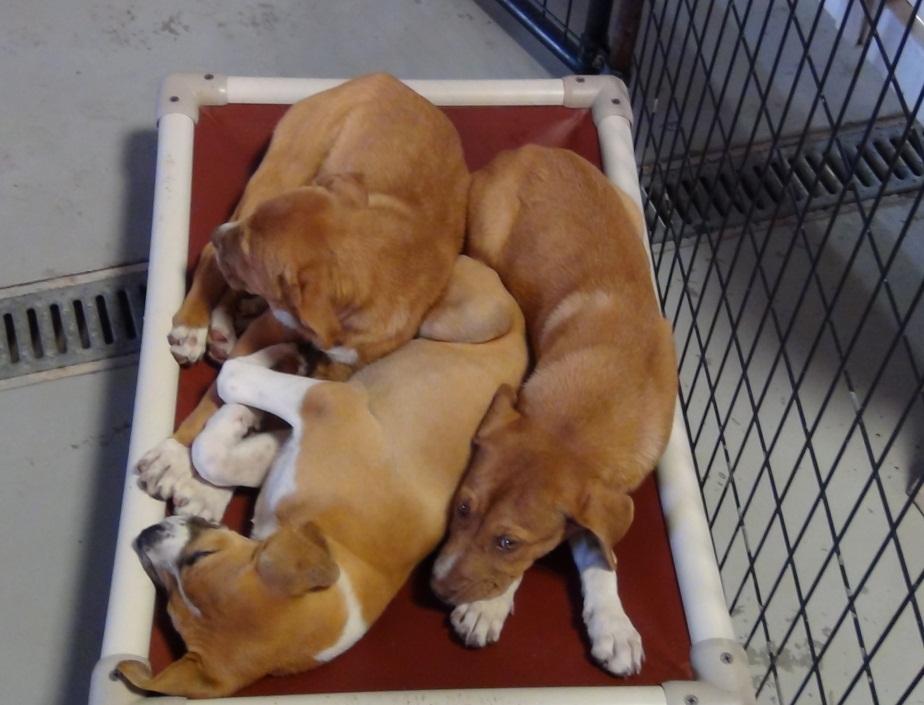 Rescue U Is Off To Florida Petfinder Foundation