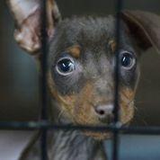 Rescued Rowan County puppy.