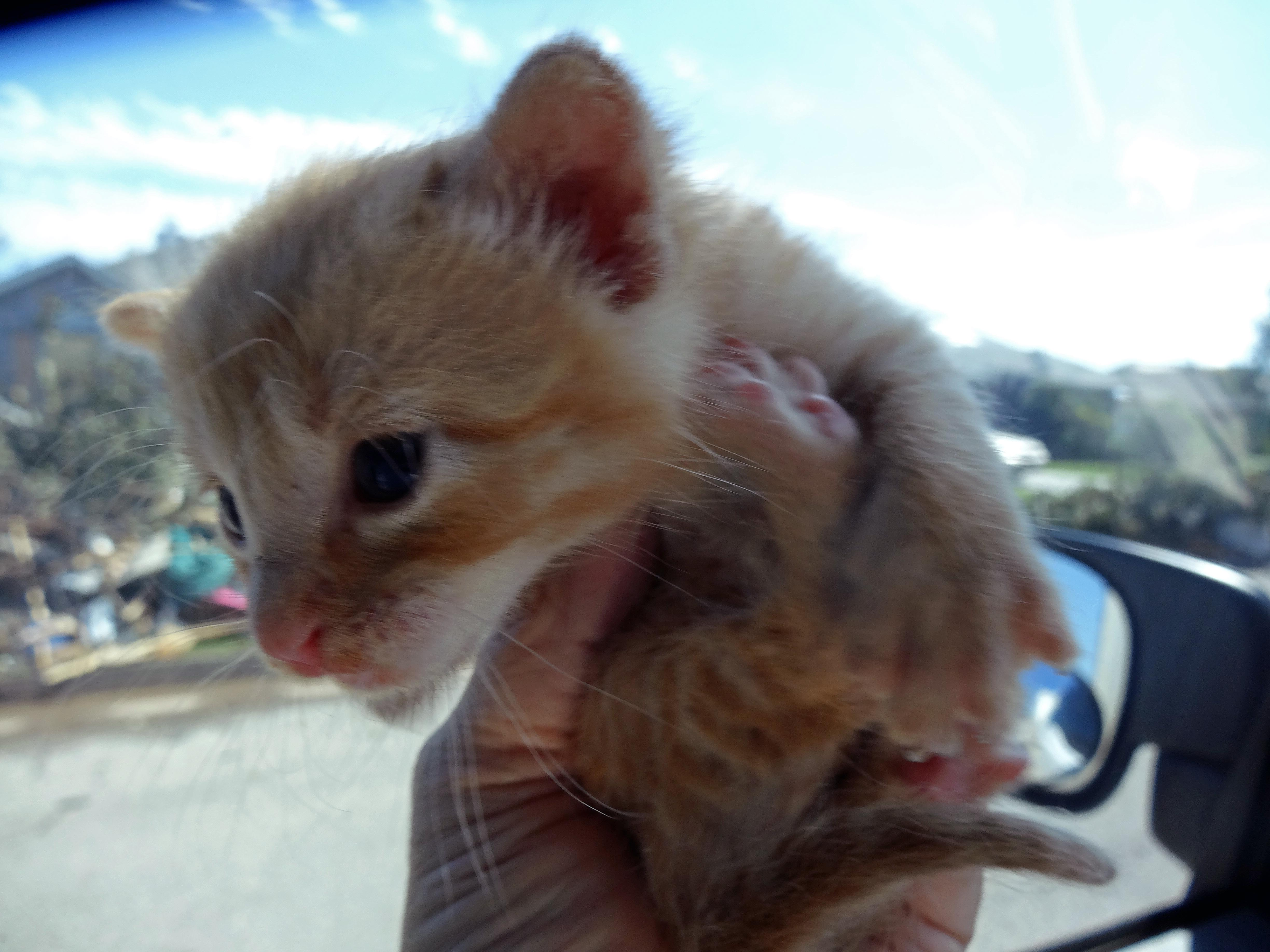 Kitten rescued from rubble