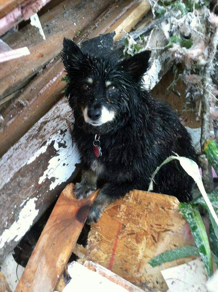 Susie the hero dog