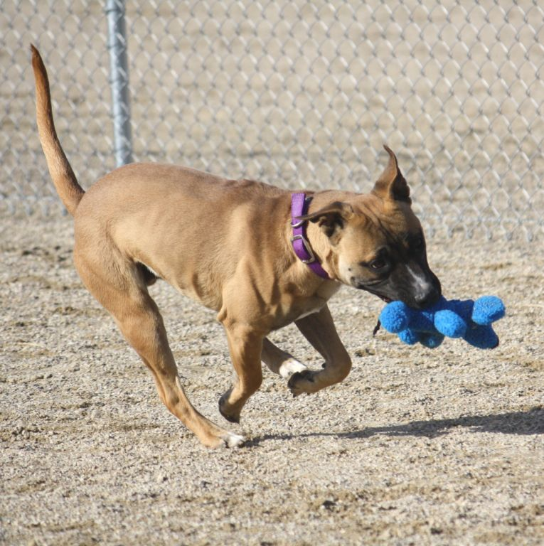 Taz Plays and Romps