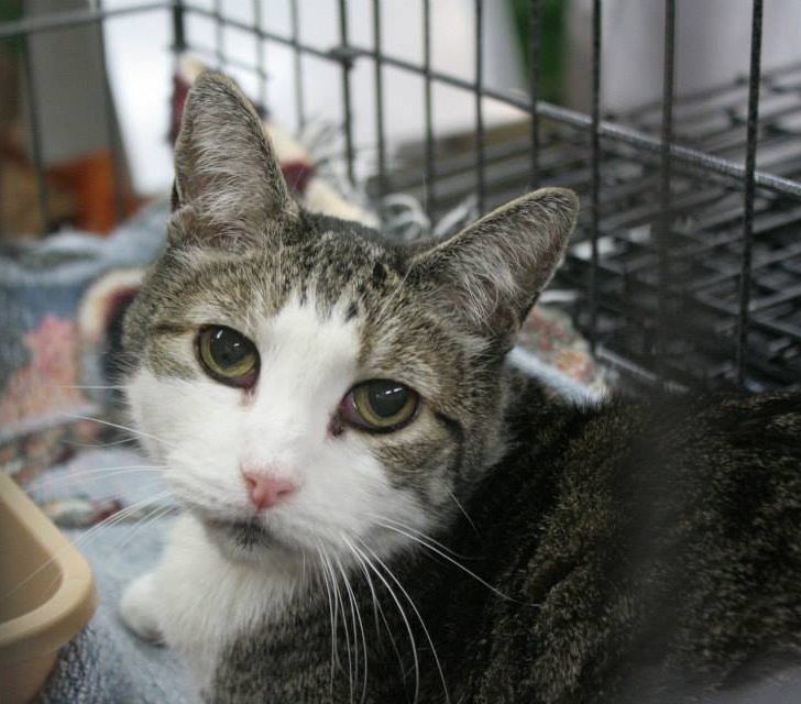 Displaced Cat in Kennel
