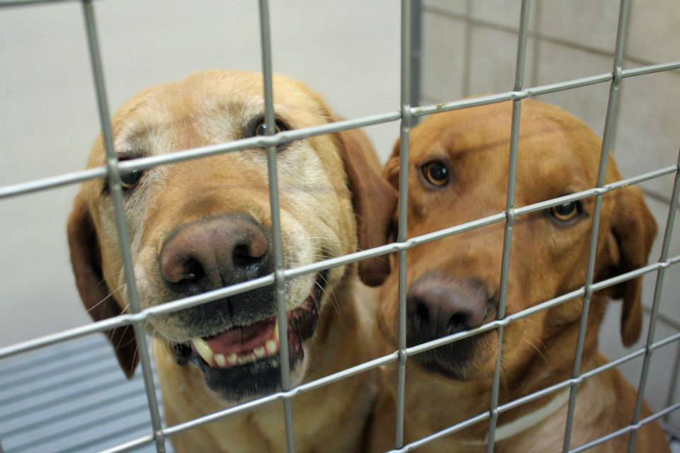 Two Displaced Dogs in a Cage