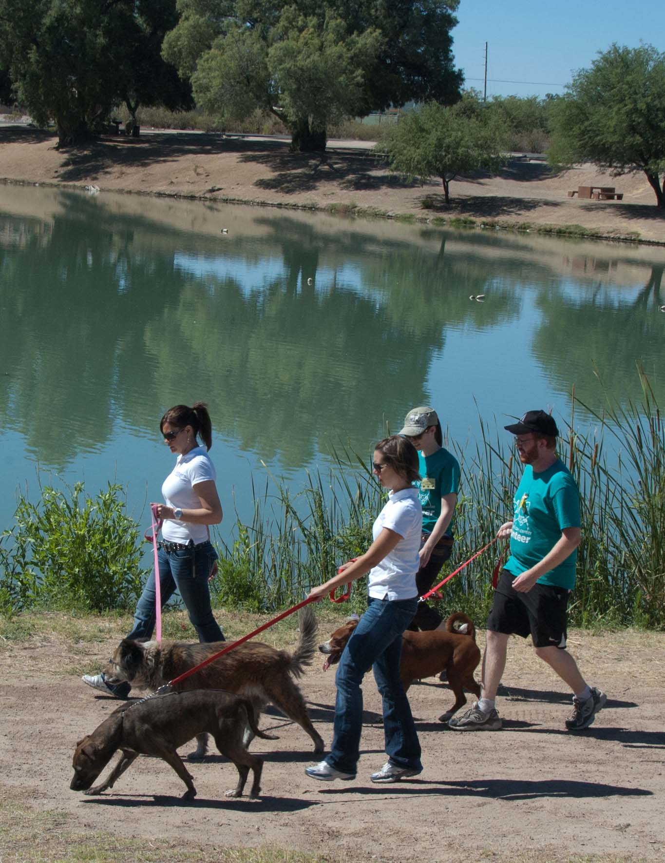 Foundation Walks Dogs Around the Lake