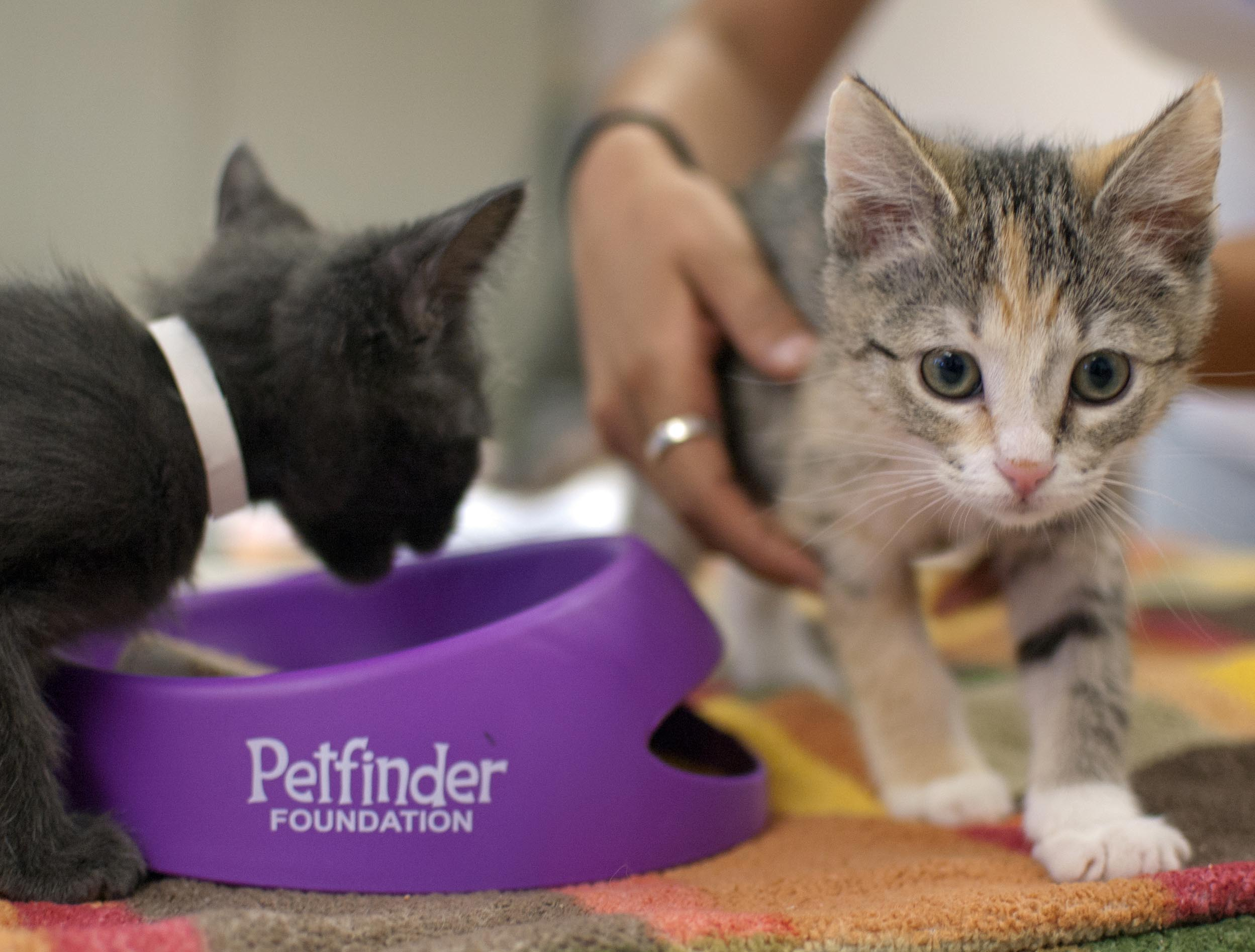 Sibling 9-week-old kittens Emmit, left, and Lily enjoyed their catsicles.