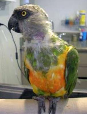 Nelson, the Elderly Parrot