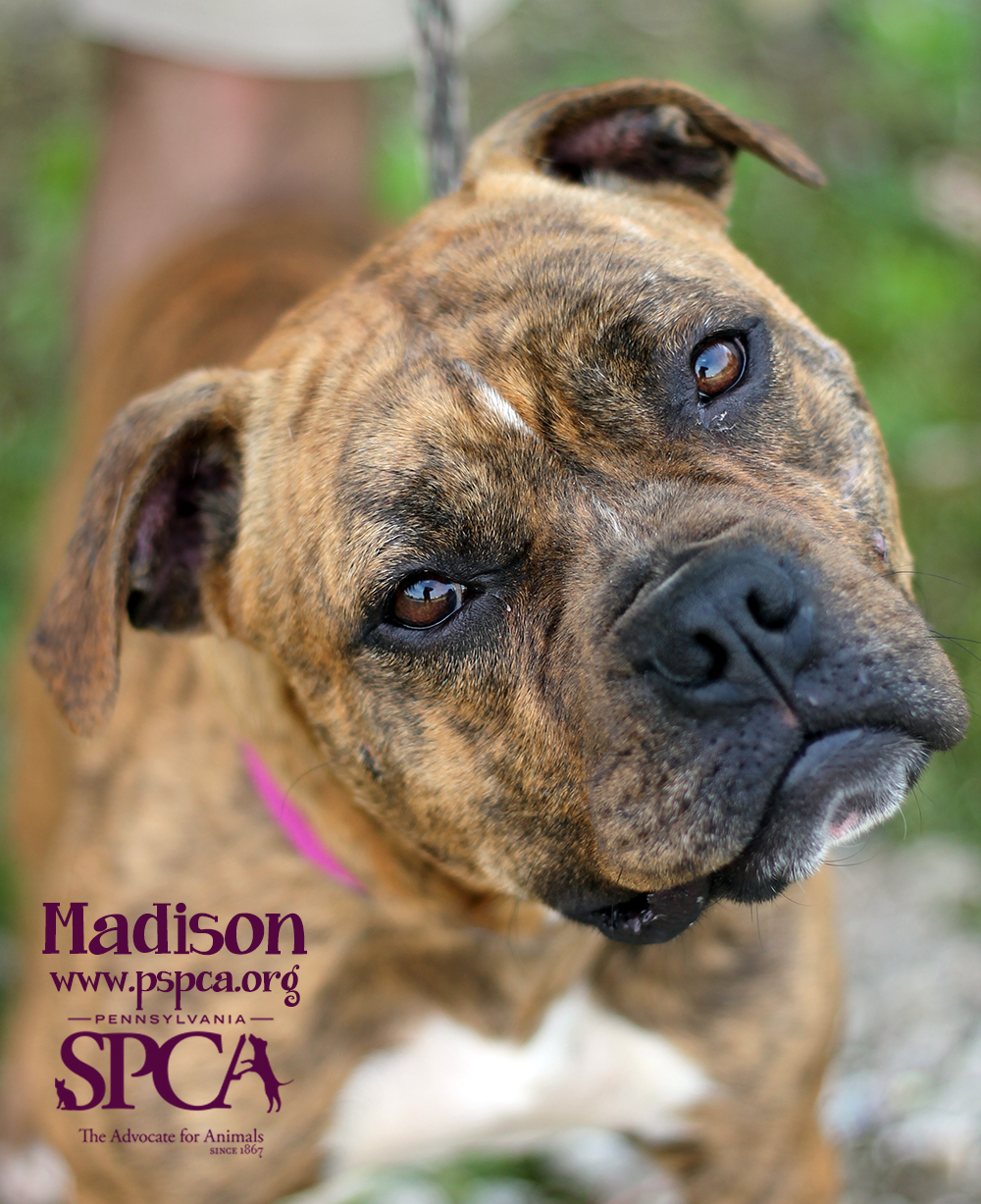 Grant Reports for Shelter ID PA190 | Petfinder Foundation