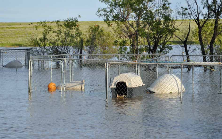 Flooded dog runs at RezQ Dogs.