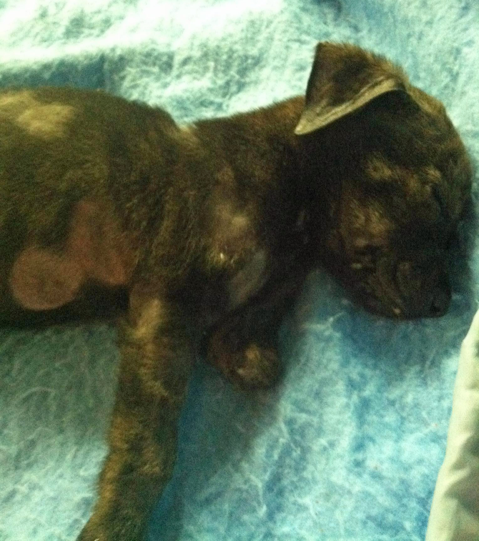 Aggie was missing a limb and suffering from a staph infection.