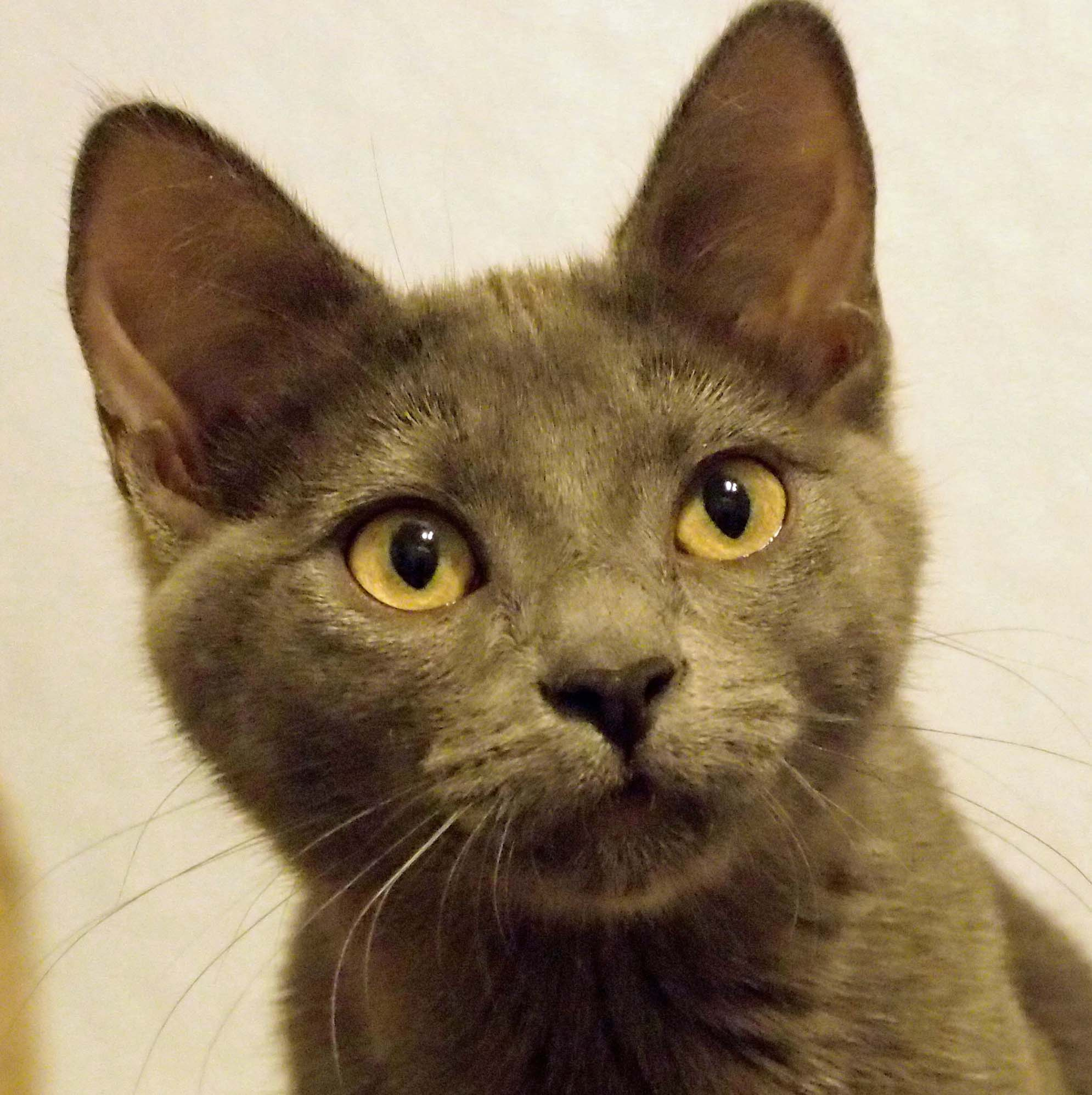 Ashley is a feline leukemia-positive cat being helped by our grant.