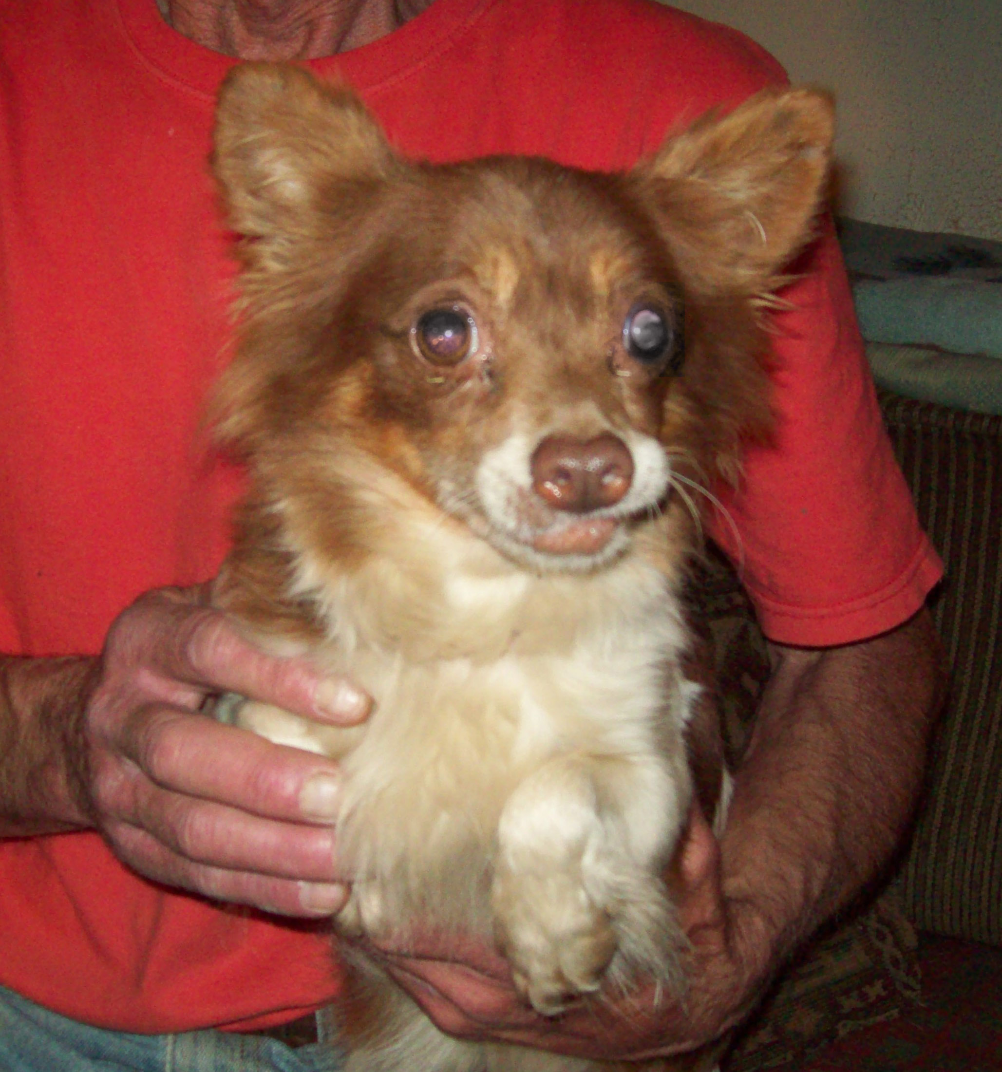 Our SNAP-X grant helped Hannah, a puppy mill survivor, find a loving home.