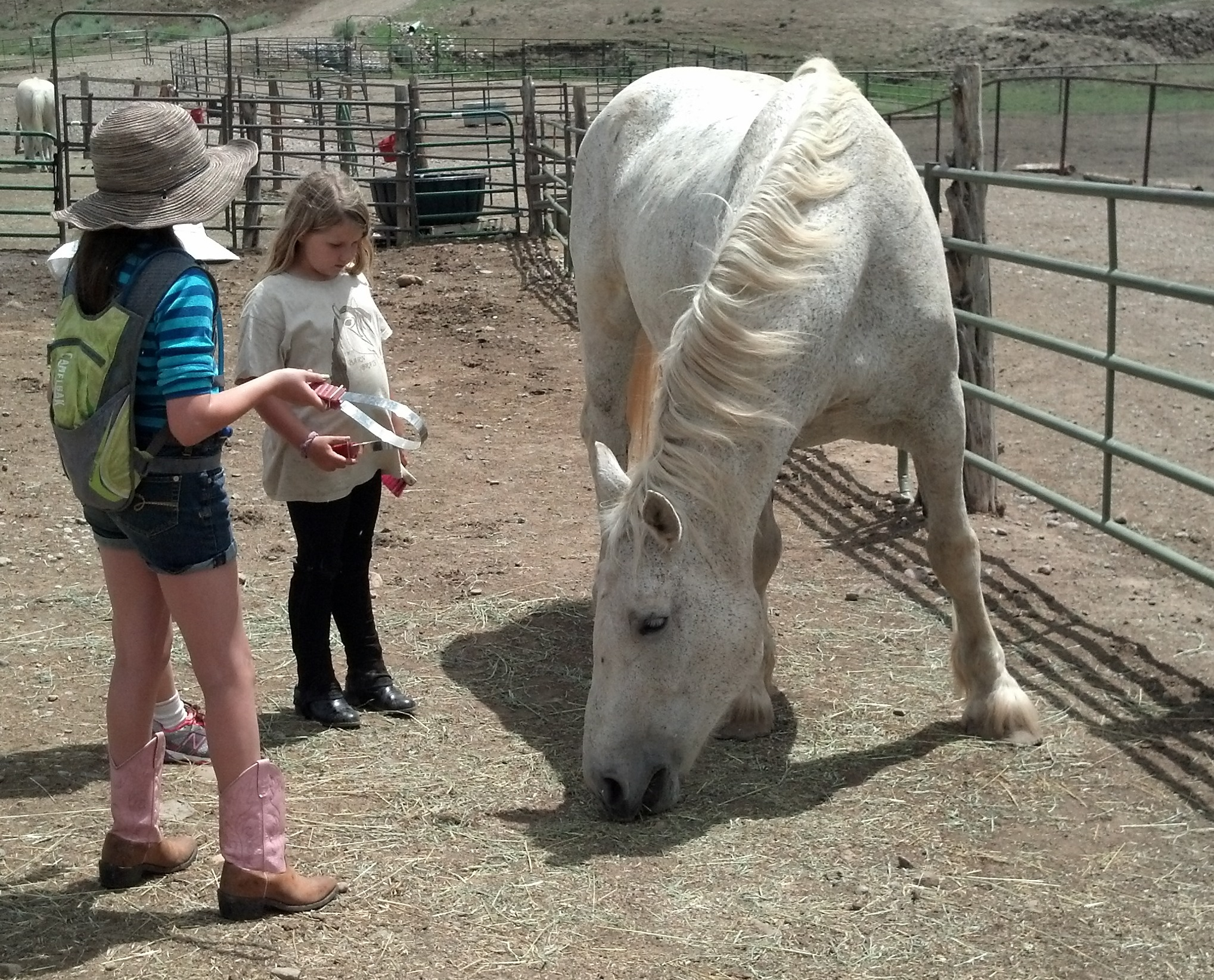 What are some companies that offer equine grants?