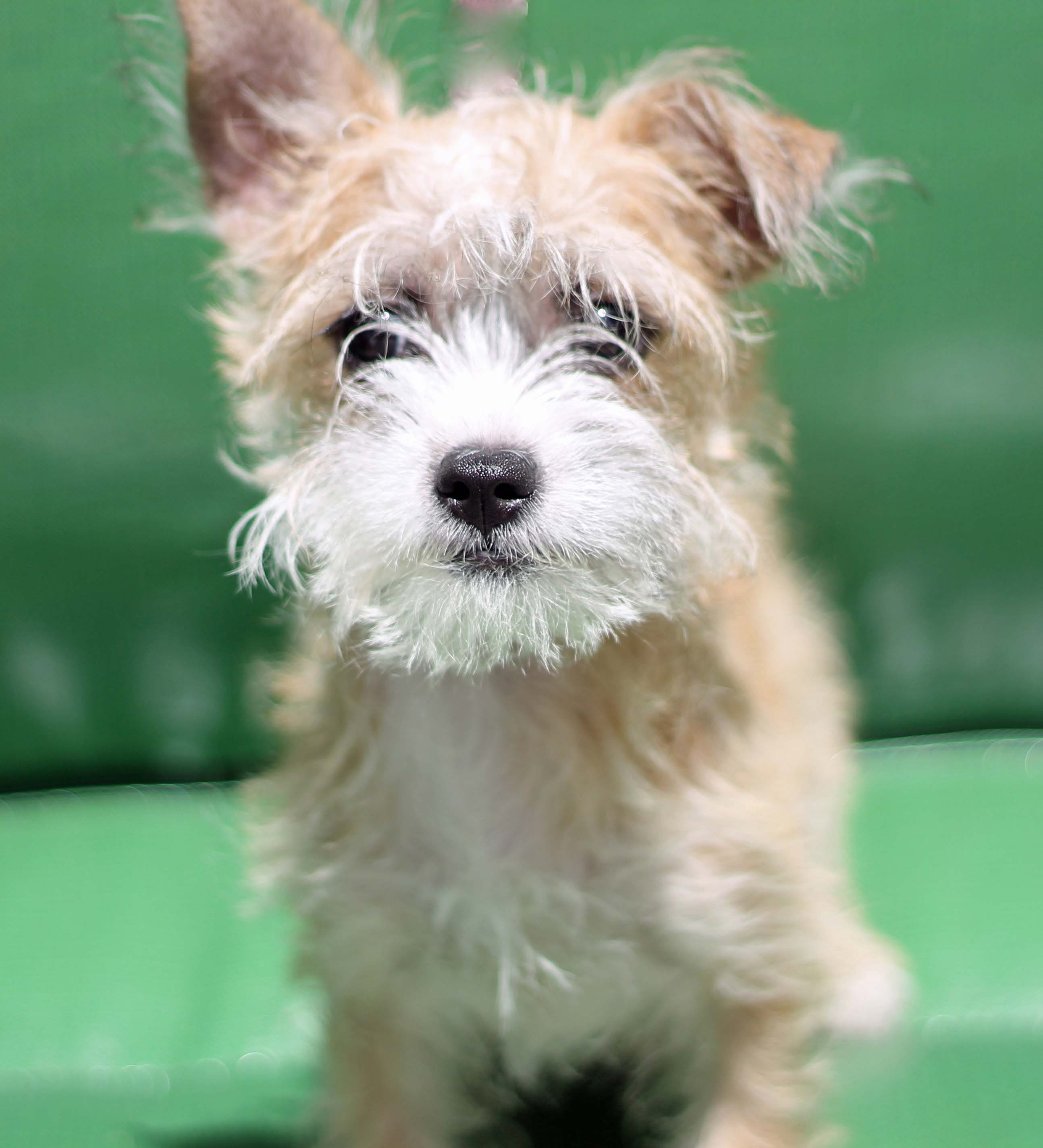 emily - doggie protective services - smaller