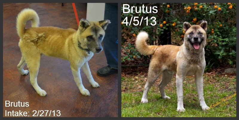 Our disaster grant helped St. John Parish Animal Shelter transform Brutus.