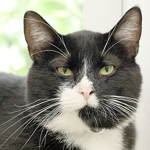 Give to us through Global Giving from 10/14-11/12 and have double the impact for homeless cats like Bubba.