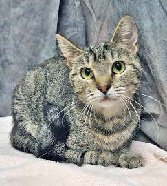 Give to us through Global Giving from 10/14-11/12 and have double the impact for homeless cats like Tiger Bella.