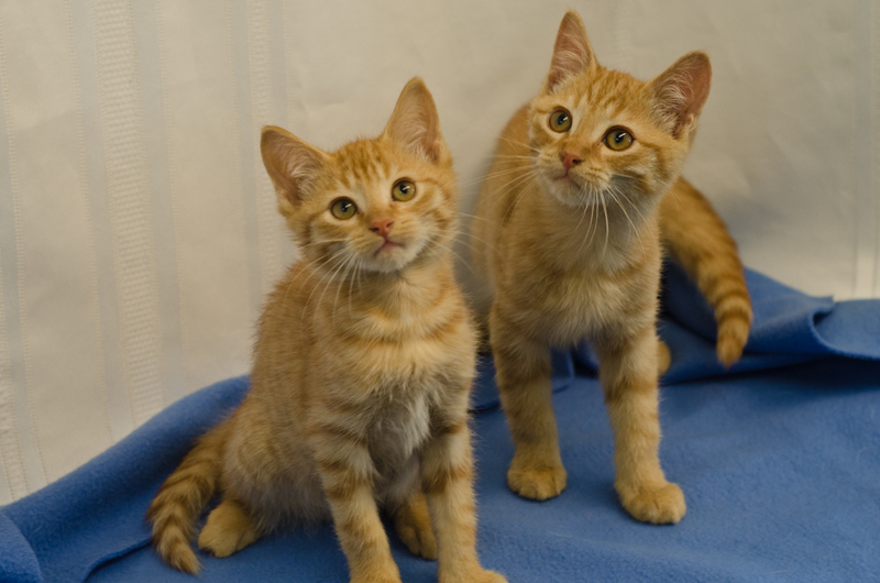 Rhode Island Animal Shelters Cats