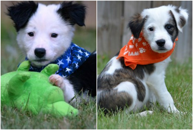 Adorable (left) and Imp (Photo: The Humane Society of Elmore County)