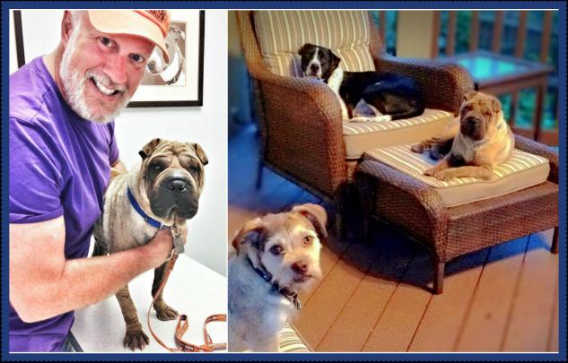 Leroy (Photo: National Mill Dog Rescue)