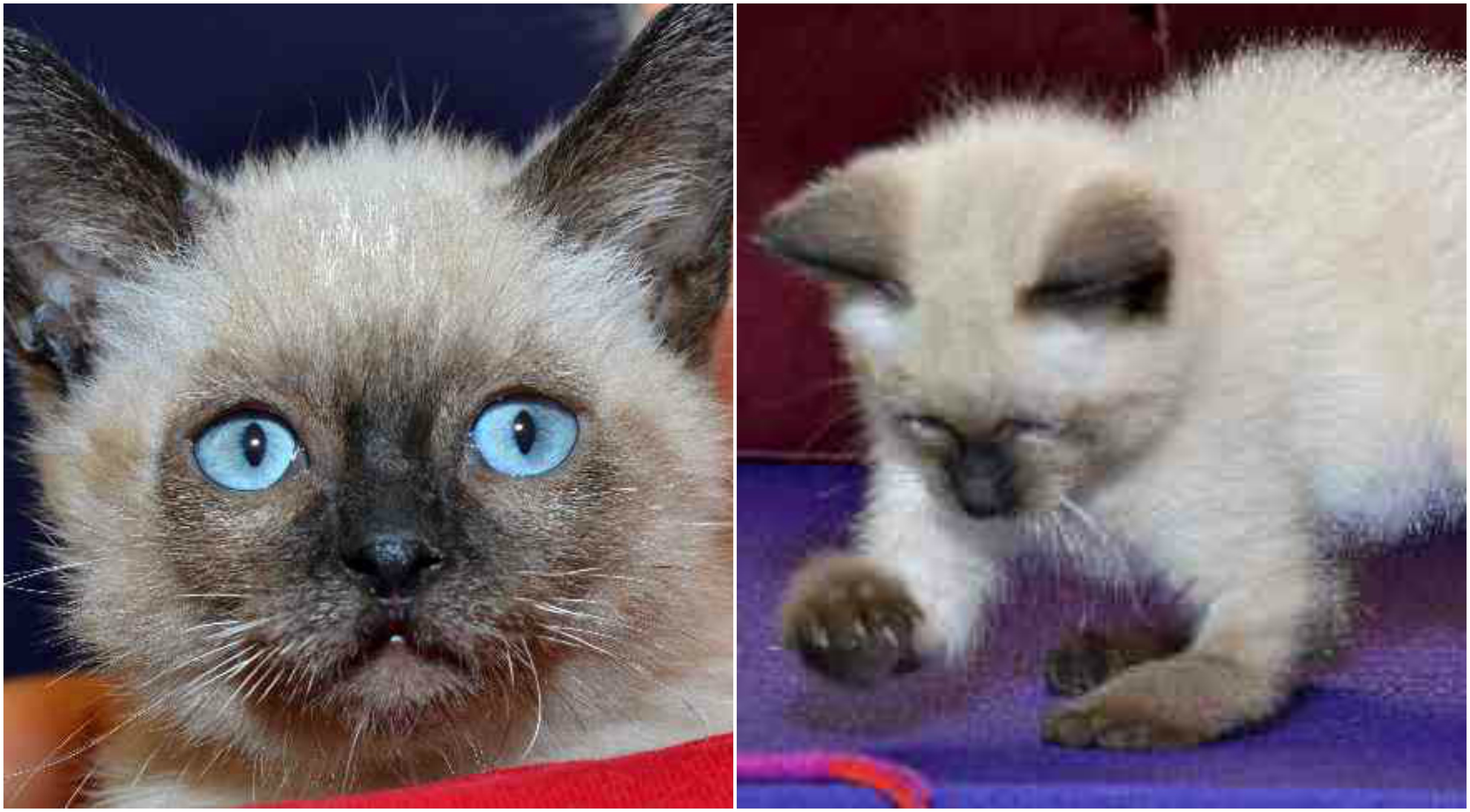 Top 10 Kittens Making Adopt Me Faces of 2013