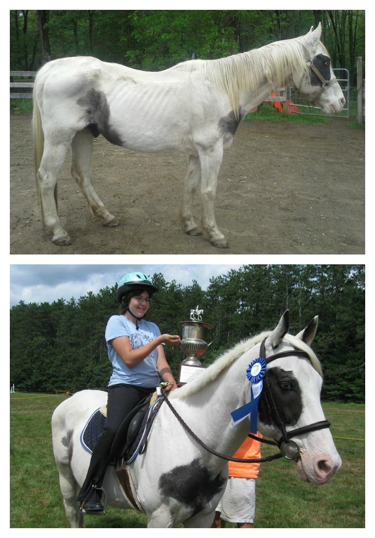 Petey (Photo: New England Equine Rescue North)