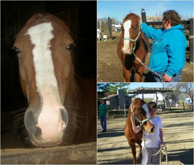 Vincent (Photo: Triple R Equine Rescue Ranch)