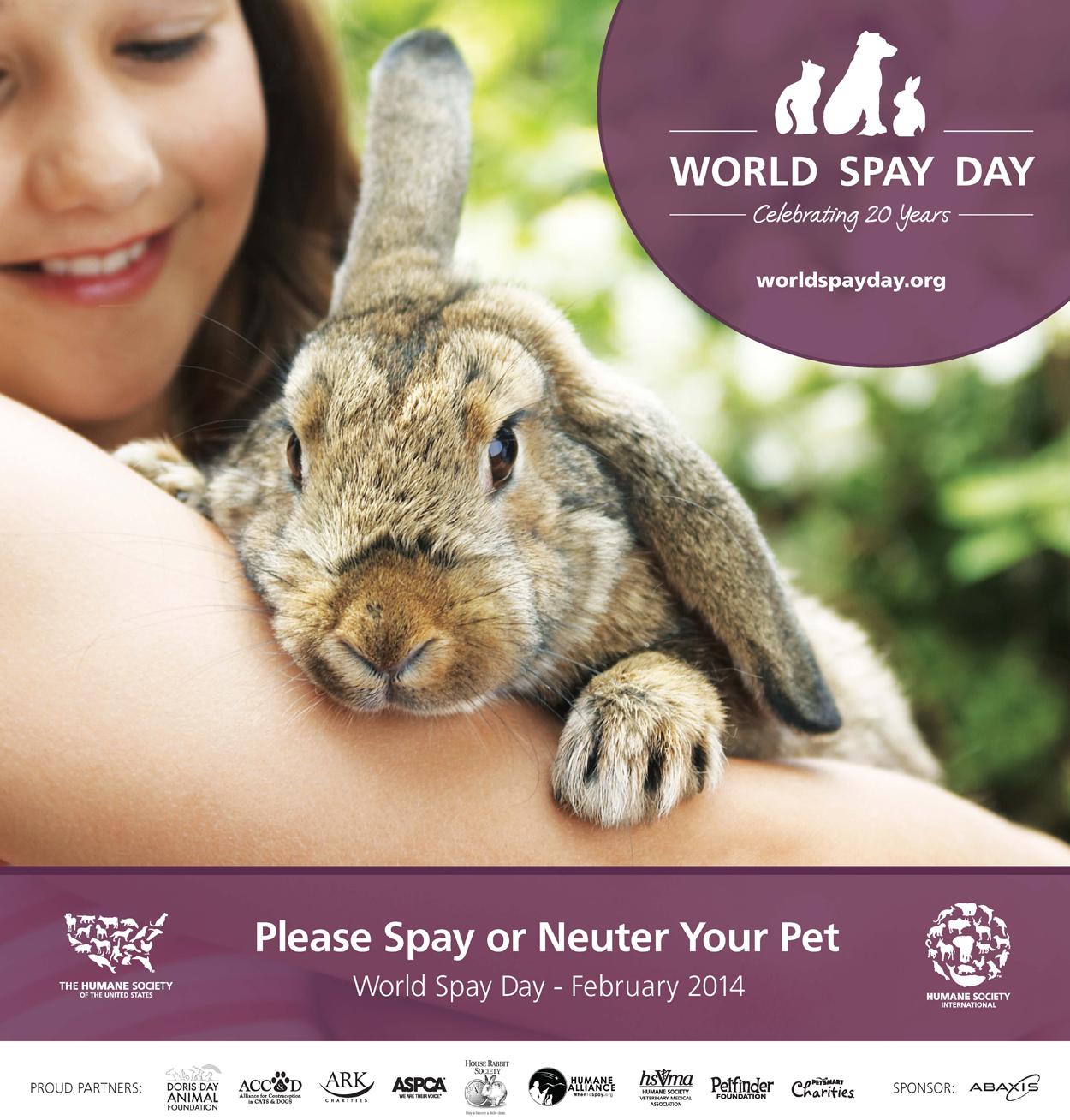 WSD-rabbit-cropped