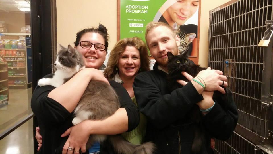 cat-adoptions