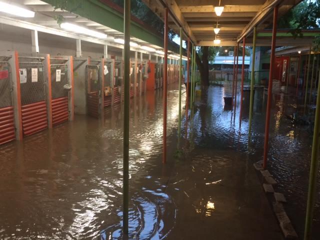 APA_floodedkennels3