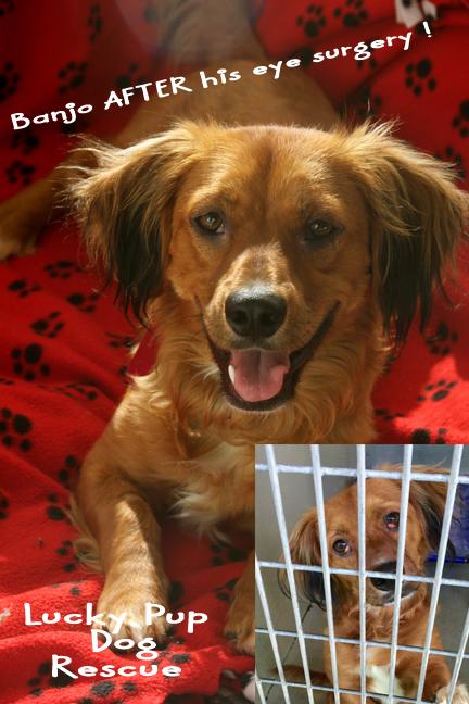 brown dog banjo