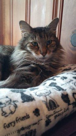 Only Maine Coons Rescue: Sponsor a Pet Grant Report