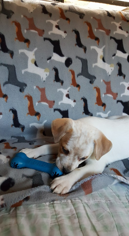 Lucky Paws Rescue: KONG Toy Grant Report | Petfinder Foundation