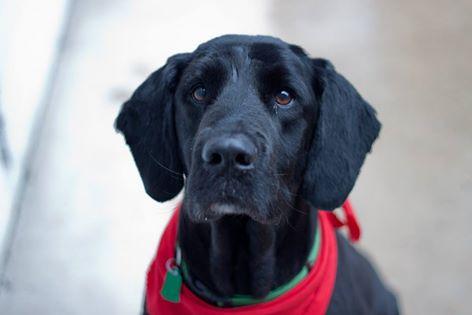 Underdog Pet Rescue of Wisconsin, Inc : Orvis Animal Care