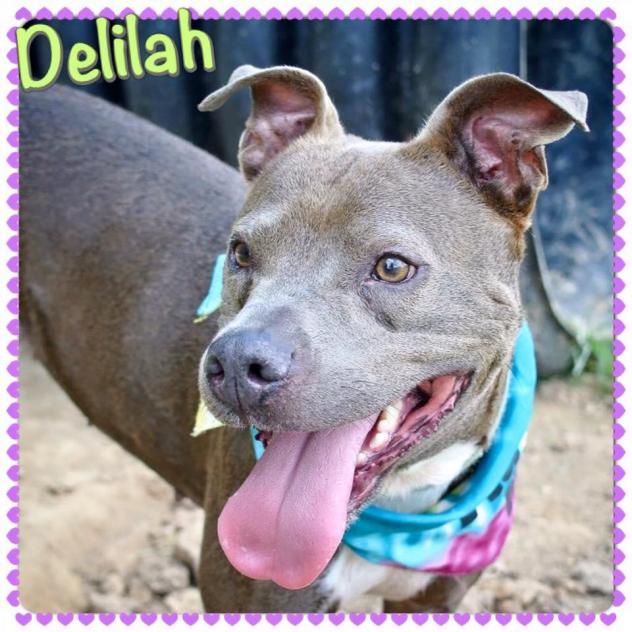 delilah1