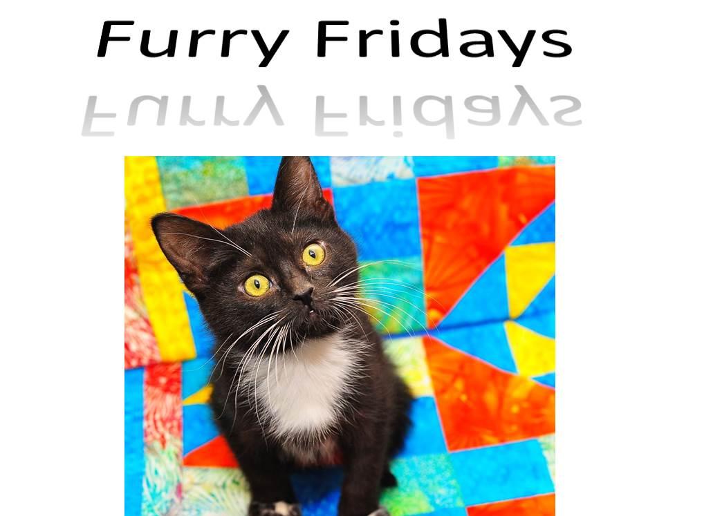 Furry Friday