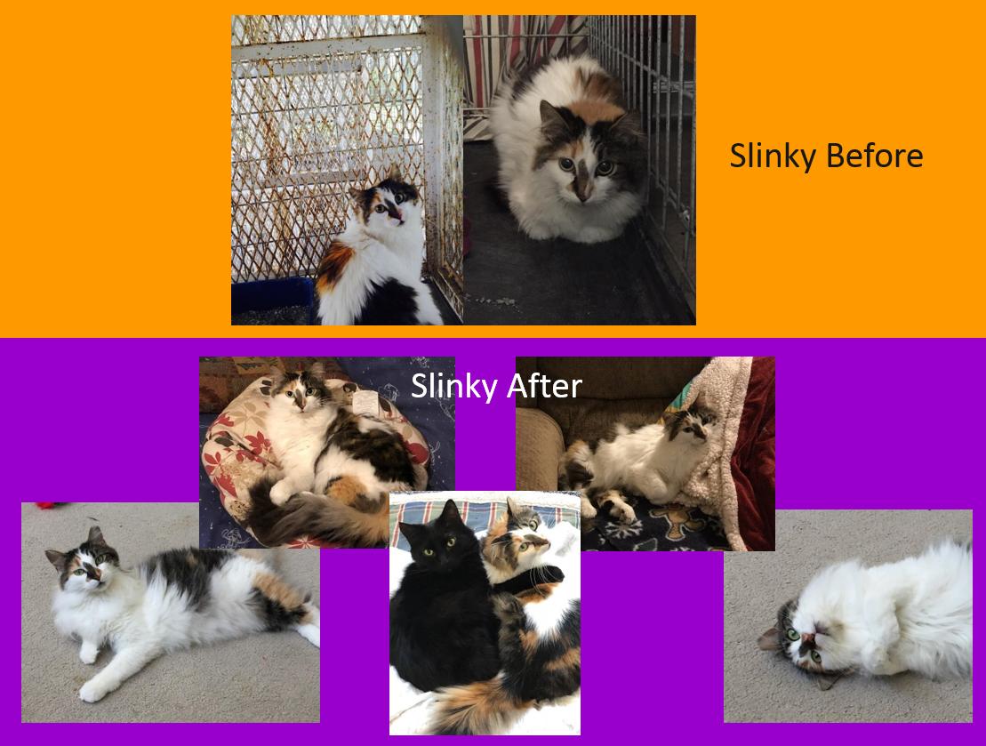 Slinky_Before_After.jpg
