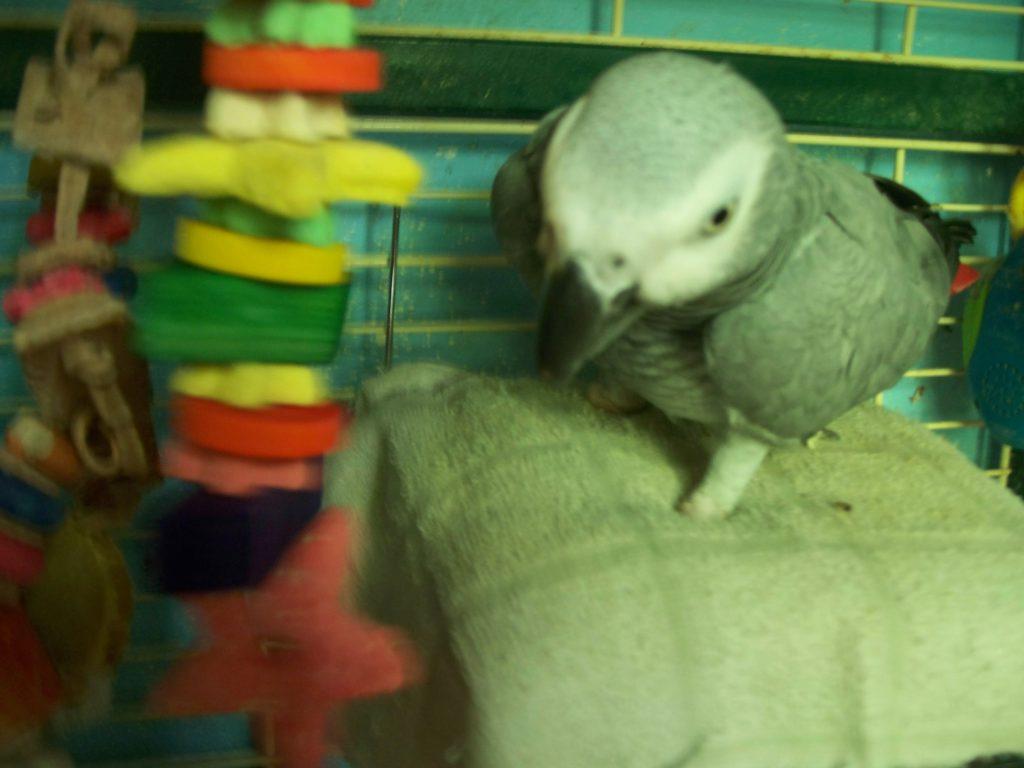 Flock Together Bird Rescue, Inc : Sponsor a Pet Grant Report