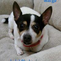margo-before