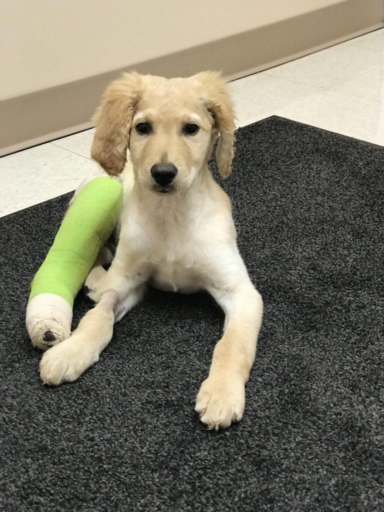 Help Orphan Puppies Inc Emergency Medical Grant Report