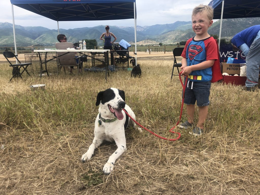 LifeLine Animal Project: Dogs Playing for Life Mentorship