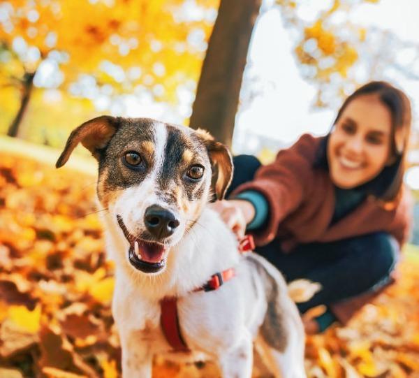 Home   Petfinder Foundation